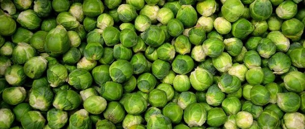 brussels-sprouts-22009_960_720-e1478903456903