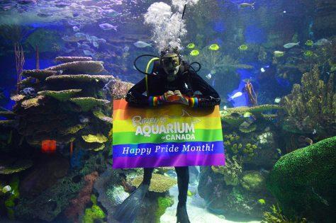 ナイト・アット・ザ・アクアリウム(Night at the aquarium) @ Ripley's Aquarium of Canada | Toronto | Ontario | カナダ