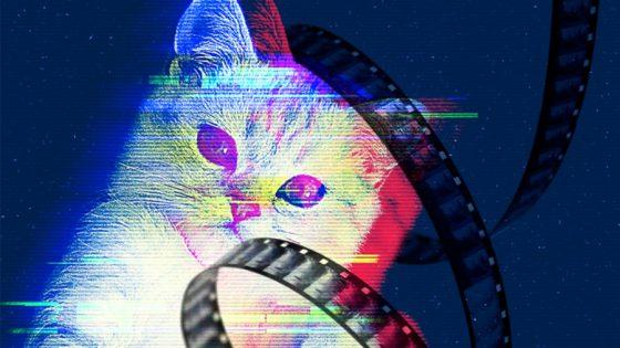 キャット・ビデオ・フェスト/Cat Video Fest @ Hot Docs Ted Rogers Cinema | Toronto | Ontario | カナダ