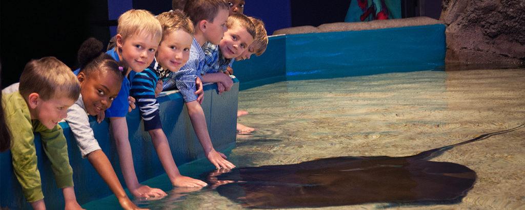 リプレイ水族館