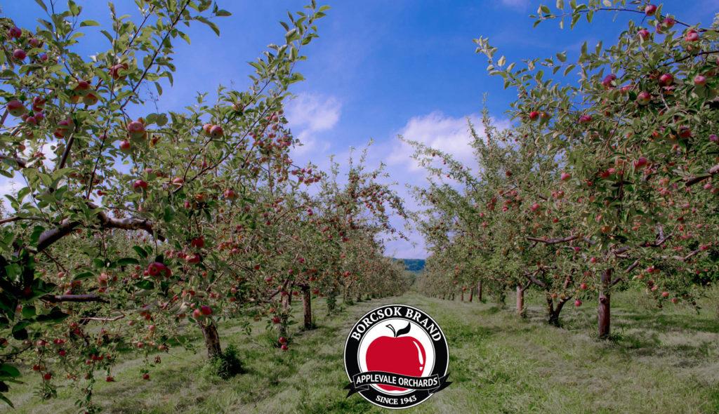 アップルベール果樹園